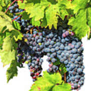 Red Grapes Seasonal Background Art Print