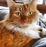 Red-haired Kitten Art Print