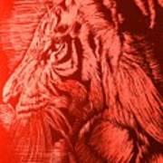 Red Head Tiger Art Print