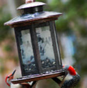 Red Head Wood Peckers On Feeder Art Print