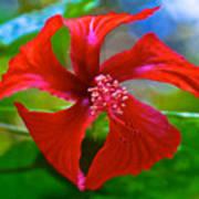 Red Hyacinth In Bourbon Resort Gardens Near Iguazu Falls National Park-brazil  Art Print