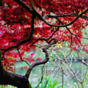 Red Japanese Maple Art Print