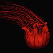Red Jellyfish Art Print