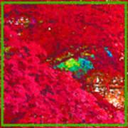Red Maple 4 Art Print