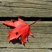 Red Maple Leaf On A Boardwalk  Art Print