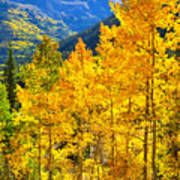 Red Mountain Aspens Art Print