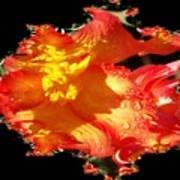Red N Yellow Flowers Art Print