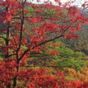 Red Oak And Millers River Valley Art Print