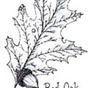 Red Oak Leaf And Acorn Art Print