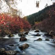 Red Oak Slow River Art Print