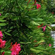 Red Oleander Arbor Art Print