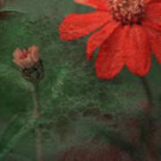 Red Passion... Art Print