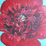 Red  Peonie Art Print