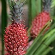 Red Pineapples Art Print