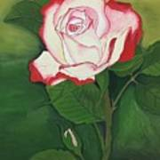 Red-pink Rose Art Print