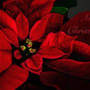 Red Poinsettia Merry Christmas Card Art Print