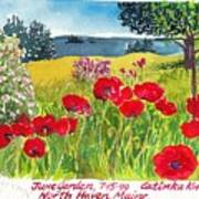 Red Poppies Coastal Maine Island June Garden North Haven  Art Print