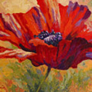 Red Poppy II Art Print