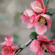 Red Quince Art Print