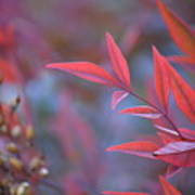 Red Red Leaves Art Print