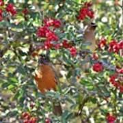 Red Robin And Cedar Waxwing 1 Art Print