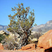 Red Rock Canyon Nv 3 Art Print