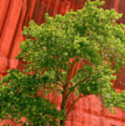 Red Rock Green Tree Art Print