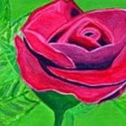 Red Rose 2 Art Print