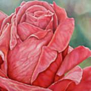 Red Rose 93 Art Print
