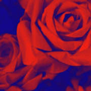 Red, Rose And Blue Art Print