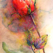Red Rose From The Past Art Print