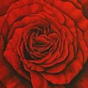 Red Rose II Art Print