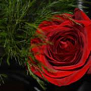Red Rose With Garnish And Black Velvet Art Print