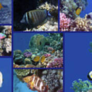 Red Sea Collage Art Print