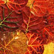 Red Sea Grapes By Sharon Cummings Art Print