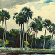 Red Shirt Homosassa Florida Art Print