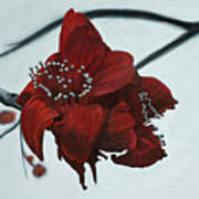Red Silk Cotton Flower Art Print