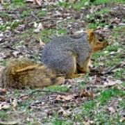 Fox Squirrel 2 Art Print