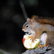 Red Squirrel Art Print by Steven Scott