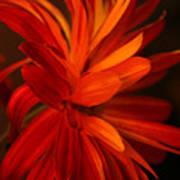 Red Sunflower 1 Art Print