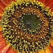 Red Sunflower Macro Art Print