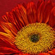 Red Sunflower Viii Art Print