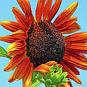 Red Sunflowers-adult And Child Art Print