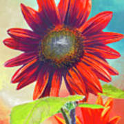 Red Sunflowers At Sundown Art Print