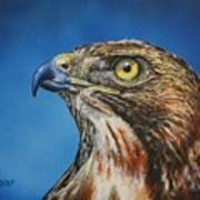 Red-tailed Hawk......honor Art Print