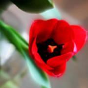 Red Tulip Art Print