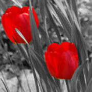 Red Tulip Duo Art Print