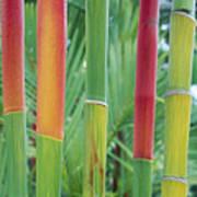 Red Wax Palm Stalks Art Print