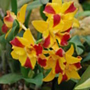 Red Yellow Orchids Art Print