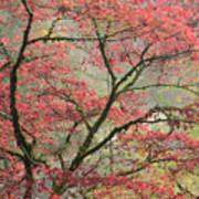 Red Zen Art Print